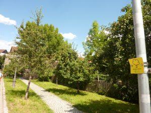 Naschbäume der Stadt Neustadt